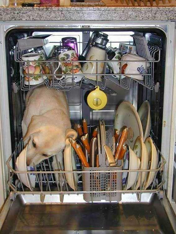 Chien dans lave-vaisselle