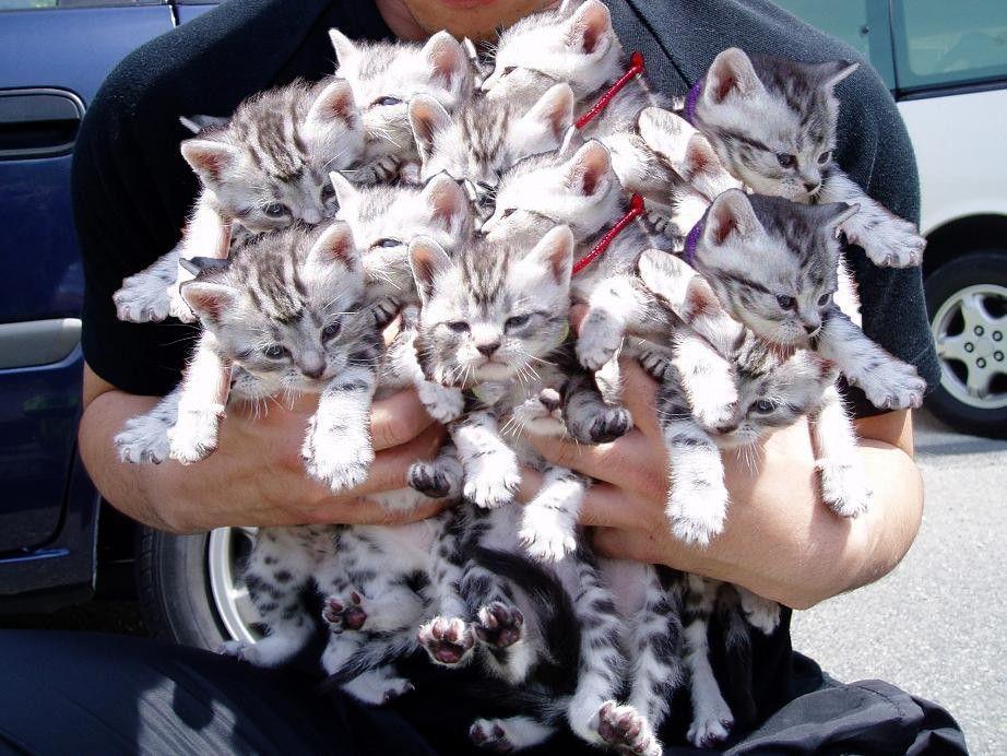 Paquet de chats
